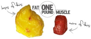 Muscle occupies less space than fat :)